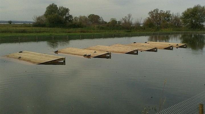 Trasimeno traslocate 2500 tartarughe del centro for Lago per tartarughe