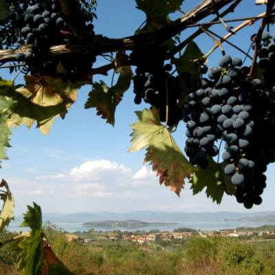 Degustazioni guidate vini del Trasimeno strada del vino umbria